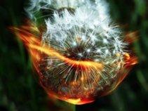 Burnin' Dandelions