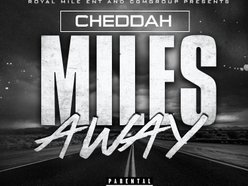Image for CHEDDAH BOY
