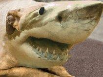 Shark Eyed Bark
