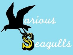 Image for Various Seagulls