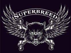 Image for SUPERBREED