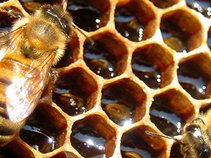 The Honey Collective