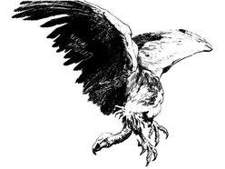 Vulture Shit