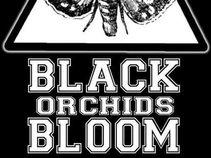 Black Orchids Bloom