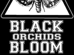Image for Black Orchids Bloom