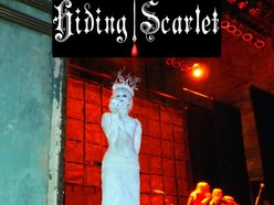 Image for Hiding Scarlet