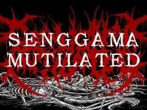 """SENGGAMA MUTILATED"""