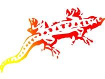 Sunspots for Salamanders