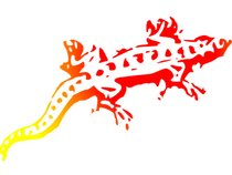 Sunspots for Salamanders