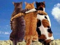 Phat Cats