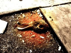 The Rabbit Done Died
