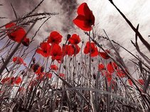 FOREVER POPPY FIELDS FOREVER