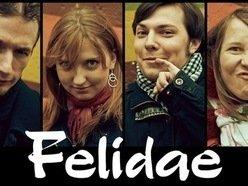 Image for Felidae