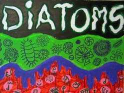 Image for The Diatoms