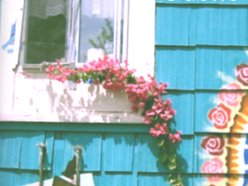 Image for Trace Faulkner/Miss Odette