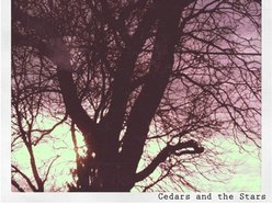 Image for Cedars and the Stars