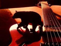 Image for Black Bears