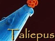 Taliepus