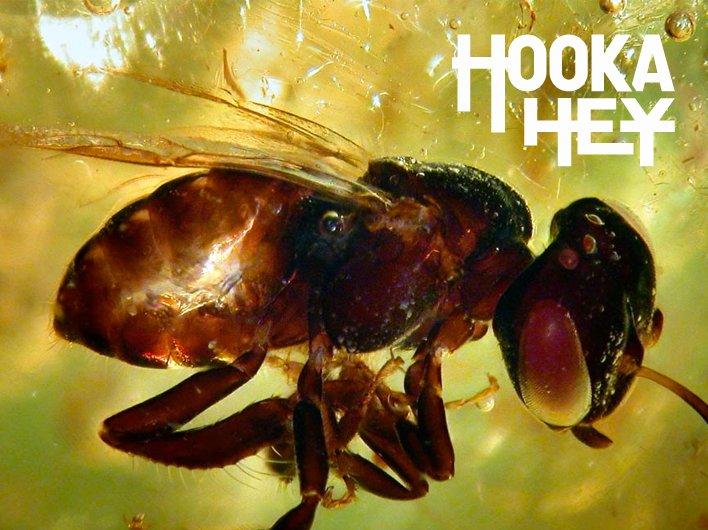 Image for HOOKA HEY