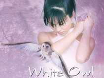 Whiteowl Entertainment