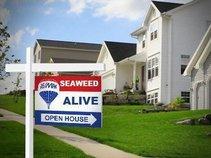 SEAWEED ALIVE
