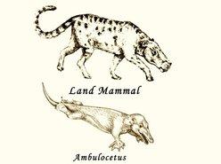 Land Mammal