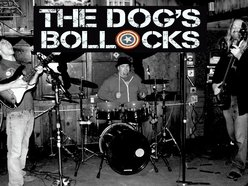 Image for TheDogsBollocksBand