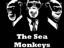 The Sea Monkeys