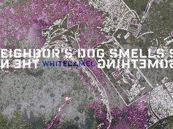 whiteCAMEL