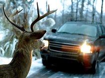 I Hit A Deer In Pennsylvania