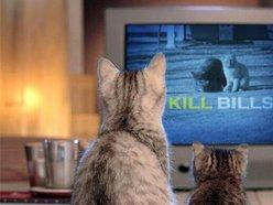 The Kill Bills