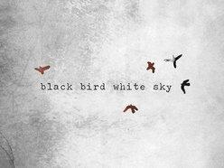 Image for black bird white sky
