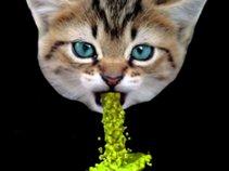 Spin Dry Kittins