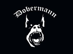 Image for Dobermann
