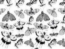 The Behavior of Moths