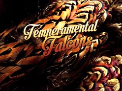Image for Temperamental Falcons