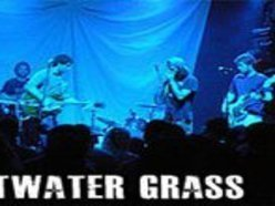 Image for Saltwater Grass