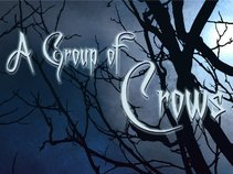 A group of crows