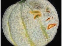 Bender Melon