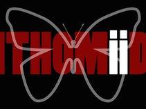 Ithomiid