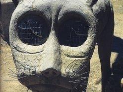 Image for Ocelot Songs