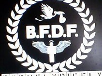 BFDF (BORN FLY DIE FLY)