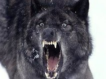 Rabid Wolves