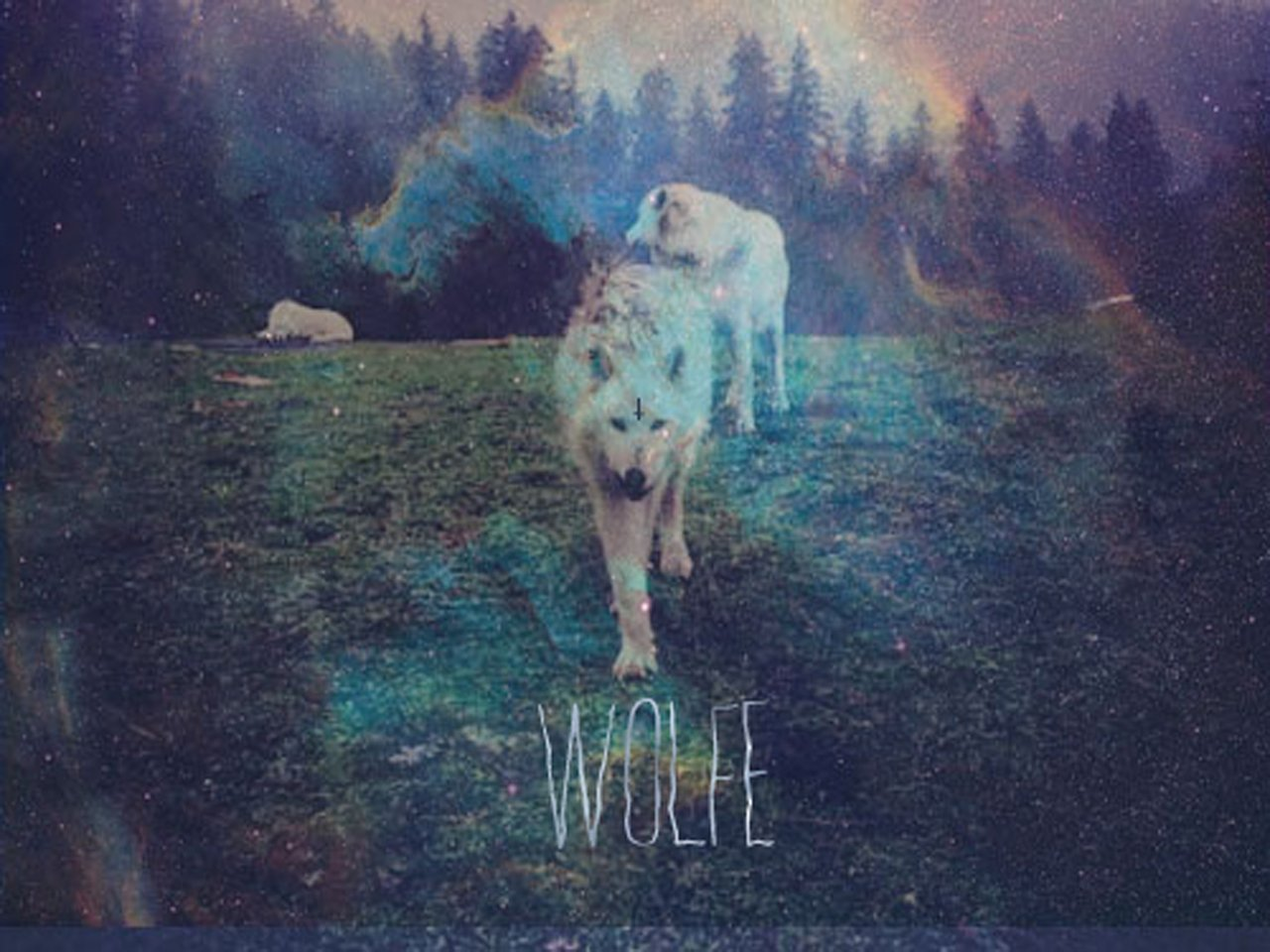 Image for wolfe.