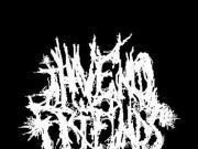 Image for I Have No Friends