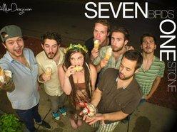 Seven Birds One Stone