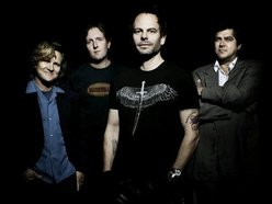 Image for Gin Blossoms