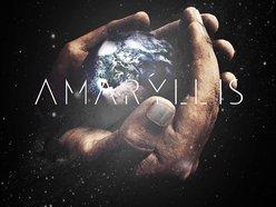 Image for Amaryllis