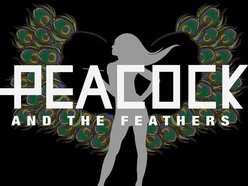 Image for Peacock & The Feathers