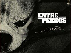 Image for Entre perros rock